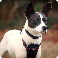 Adopt A Pet :: Krona - Barnesville, GA