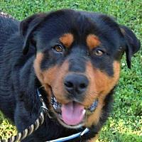 Adopt A Pet :: VICTOR - Summerville, SC