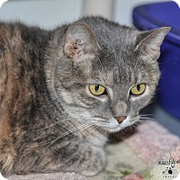Adopt A Pet :: Poofcat - Ottumwa, IA