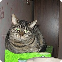 Adopt A Pet :: Princess - Foster - Toronto, ON