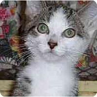 Adopt A Pet :: Ferrari - Lombard, IL