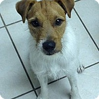 Adopt A Pet :: Bugsy in Beaumont - Houston, TX