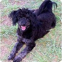 Adopt A Pet :: Jenny - San Angelo, TX