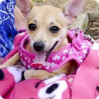 Adopt A Pet :: Tawny $100 this month only - Sacramento, CA