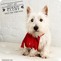 Adopt A Pet :: Mornin' Glory-pending adoption - Omaha, NE