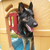 Adopt A Pet :: Mia - Louisville, KY