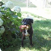 Adopt A Pet :: Mae - Palatine/Kildeer/Buffalo Grove, IL