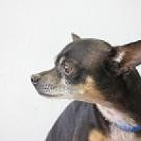 Adopt A Pet :: Wilbur - Yukon, OK