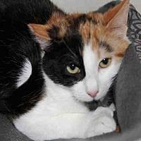 Adopt A Pet :: JOY - Hampton Bays, NY