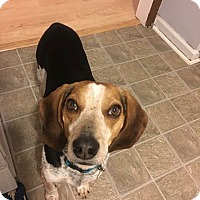 Adopt A Pet :: Scout - Huntsville, AL