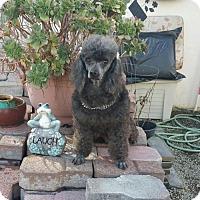 Adopt A Pet :: Minni - Yucaipa, CA