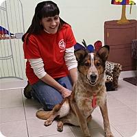 Adopt A Pet :: Allie - Elyria, OH