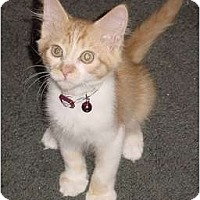 Adopt A Pet :: Joshua & Josiah - Franklin, NC