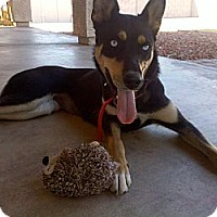 Adopt A Pet :: Krystal-Only $65 adoption fee! - Litchfield Park, AZ