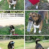Adopt A Pet :: Charlie - Vidor, TX