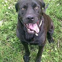 Adopt A Pet :: Dexter - Rochester, MI