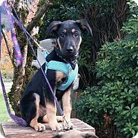 Adopt A Pet :: Hauoli - Pitt Meadows, BC