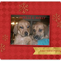 Adopt A Pet :: NOELLE & HOLLY - Ventnor City, NJ