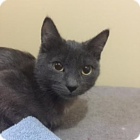 Adopt A Pet :: Smudge (Bonded to Felix) - Richmond Hill, ON