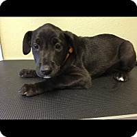 Adopt A Pet :: Bono - North Myrtle Beach, SC