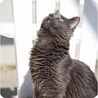 Adopt A Pet :: Hillary - Naples, FL
