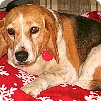 Adopt A Pet :: Honey Dew - Indianapolis, IN