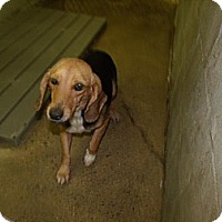 Adopt A Pet :: Wilma - Rocky Mount, NC