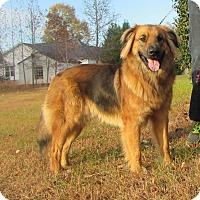 Adopt A Pet :: Oakley - Bardonia, NY