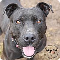 Adopt A Pet :: Hazel - Lyons, NY