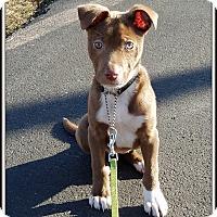 Adopt A Pet :: Mia - Milford, NJ