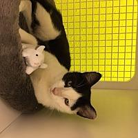 Adopt A Pet :: Carmichael - San Antonio, TX