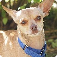 Adopt A Pet :: Henny - San Antonio, TX