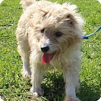 Adopt A Pet :: PDQ - Macomb, IL