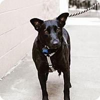 Adopt A Pet :: Gypsy - Chino Hills - Chino Hills, CA