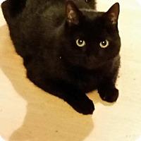Adopt A Pet :: Nickels, Nick-NIck - Laguna Woods, CA