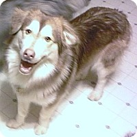 Adopt A Pet :: Tony - Horsham, PA