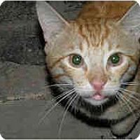 Adopt A Pet :: Chadwick - New York, NY