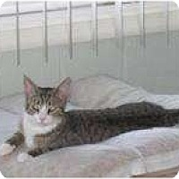 Adopt A Pet :: Tia - Catasauqua, PA