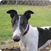 Adopt A Pet :: Tennie (In Ten City) - Chagrin Falls, OH