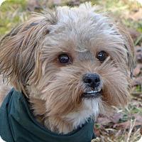 Adopt A Pet :: Buttons - Mocksville, NC