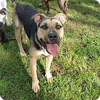Adopt A Pet :: Rose - grants pass, OR