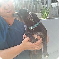 Adopt A Pet :: Marco kisses! @shelter - Los Angeles, CA