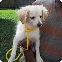 Adopt A Pet :: Franklin - Sugar Land, TX