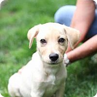 Adopt A Pet :: Trey - Marlton, NJ