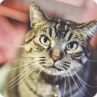 Adopt A Pet :: Buzzy - Adoption Fee Waived! - New Richmond,, WI