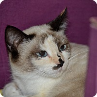 Adopt A Pet :: Penelope - Byron Center, MI