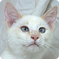Adopt A Pet :: Pierce M - Sacramento, CA