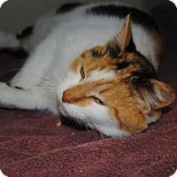 Adopt A Pet :: Reese - Ridgeland, SC