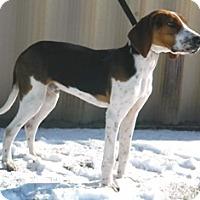 Adopt A Pet :: Beau - Columbus, NE