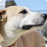 Adopt A Pet :: Teddy - Stillwater, OK